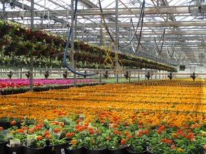 Color-Spot-Nurseries