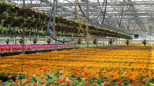 Color Spot Nurseries Emerges From Bankruptcy With New Corporate Structure