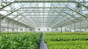 Farm Bill 2018 Includes Wins For Greenhouse Growers