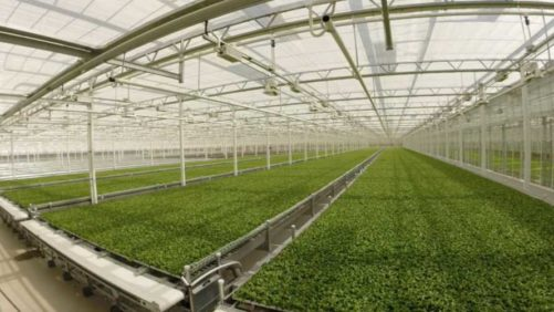 Little Leaf Farms Expands Its Indoor Baby Greens Production