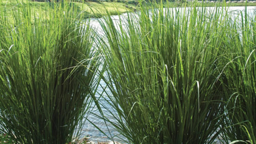 Allan Armitage: Three Ways to Market Grasses as Great Ornamentals