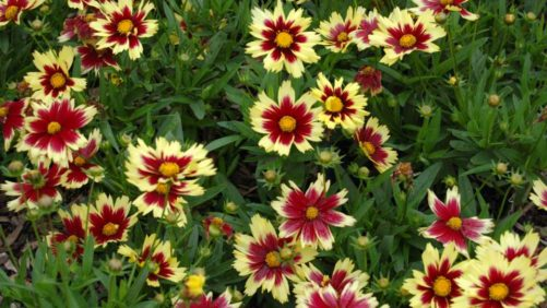 2019 National Perennial Plant Symposium Will Be a True Collaboration