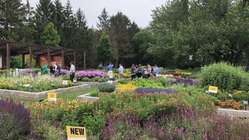 Darwin Perennials Day 2018: A Must-See Perennials Trial