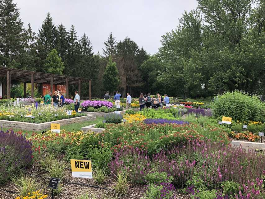Darwin Perennials Day 2018 trials