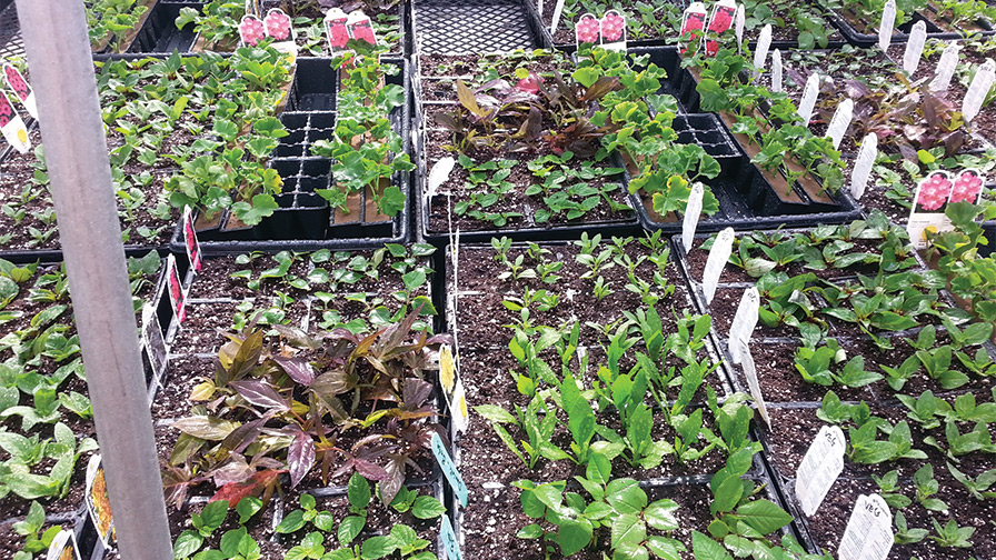 Stop Thrips From Hiding in Your Greenhouse - Greenhouse Grower