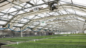 Simple Ways to Save on Greenhouse Production Costs