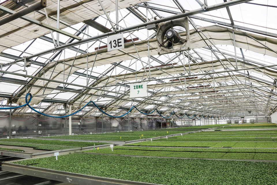 Greenhouse-at-Pacific-Plug-and-Liner greenhouse production costs