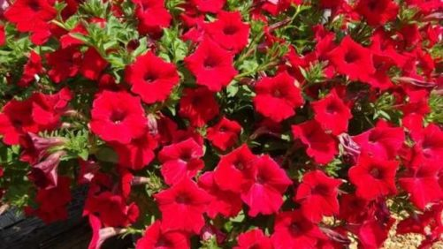 Southern Garden Tour Attendees Pick Their Favorite Plant Varieties