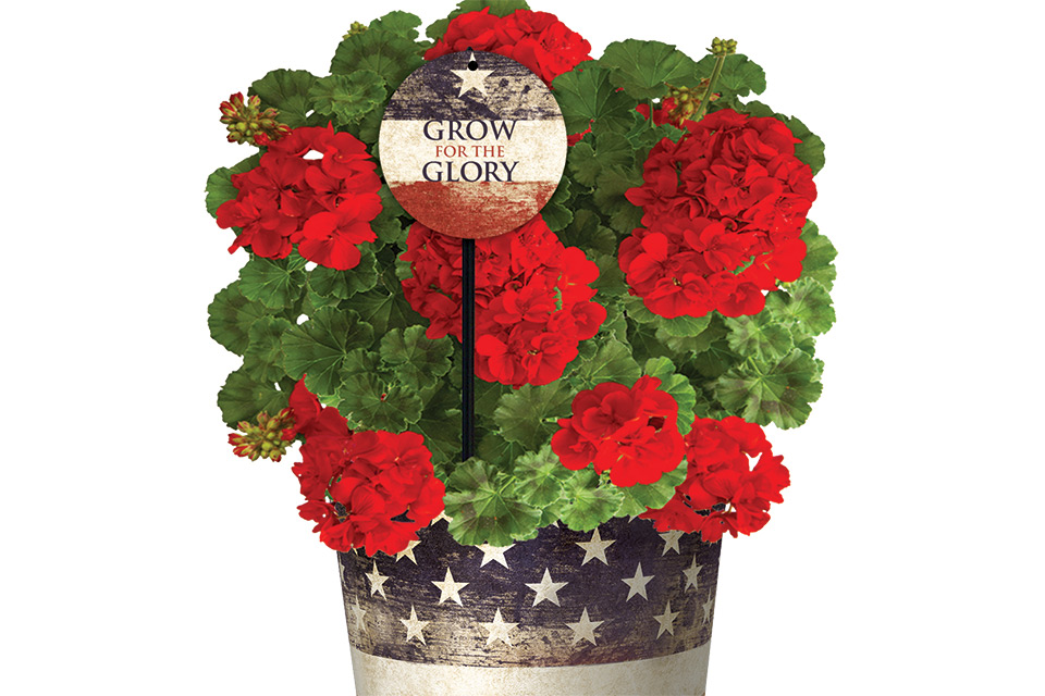 Spotlight Grow for the Glory Package MasterTag