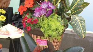 New Plant Pots, Tags, and Labels for Easy Marketing