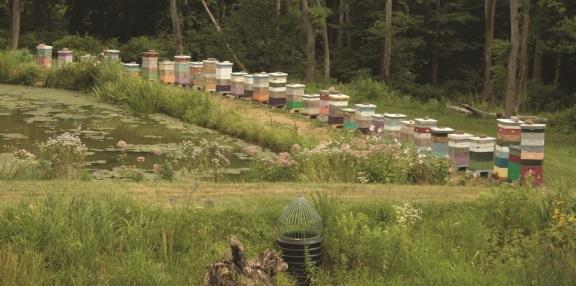 beehives-at-North-Creek-lores
