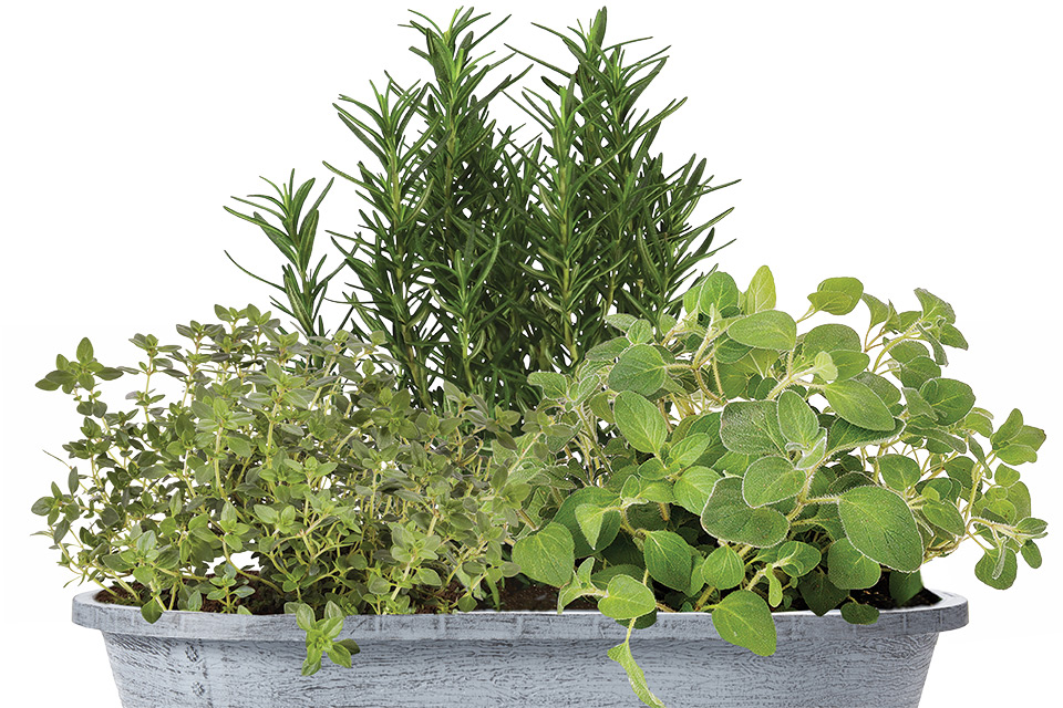 Bonnie-Plants-and-Scotts-Veggie-and-Herbs-Combo