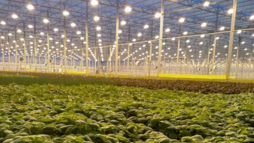 Forbes List of Innovative Ag-Tech Companies Includes Greenhouse Producers