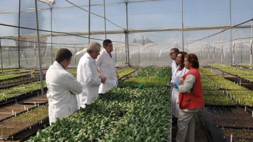 Darwin Colombia, Young's Plant Farm Gain Sustainability Certification