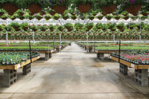 Hanging-Baskets-at-Countryside-Greenhouses