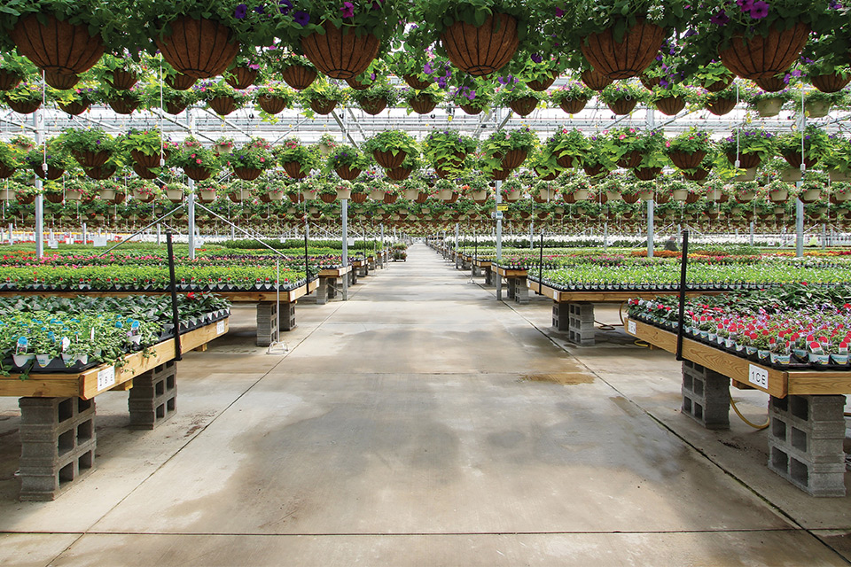 Hanging-Baskets-at-Countryside-Greenhouses Artemis