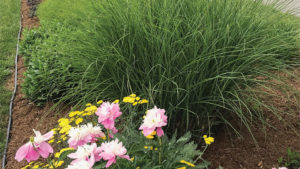 Why MPS Sustainability Certification Is  Worth the Work for Perennial Growers