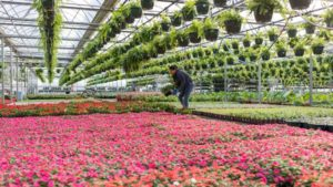 Multiflora Greenhouses Is Reimagining a Greenhouse  Business