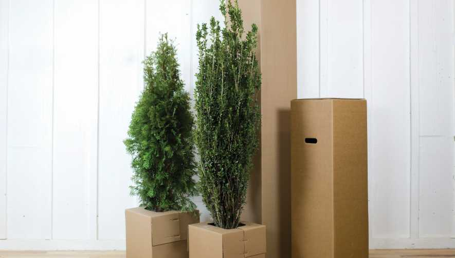Plant Shipping