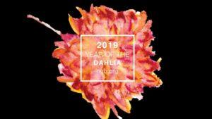"National Garden Bureau Announces ""Year of the"" Plants for 2019"