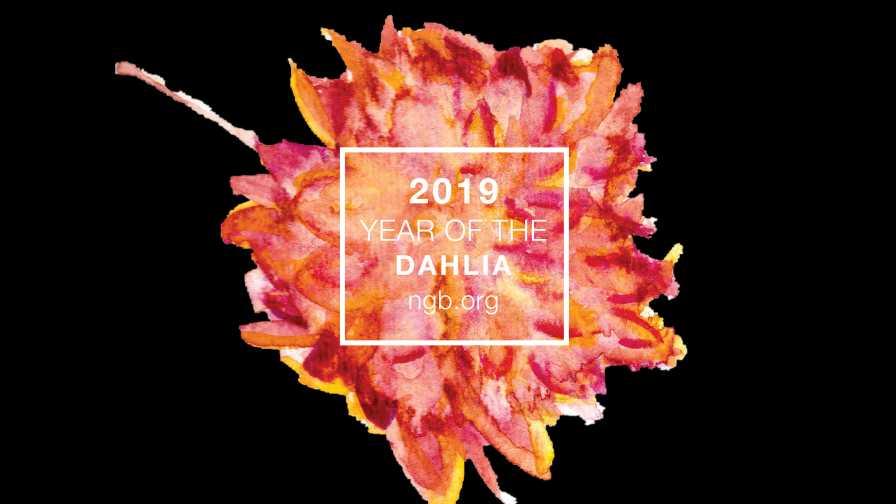 National Garden Bureau Year of the Dahlia