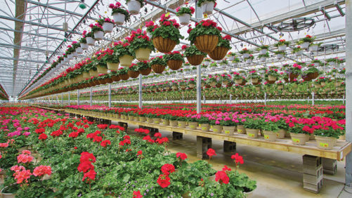 How to Manage Water Load in Your Hanging Flower Baskets