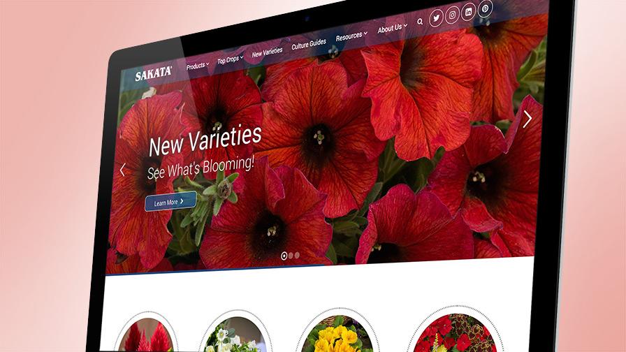 sakata new website feature