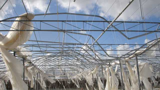 Greenhouse Hurricane Damage