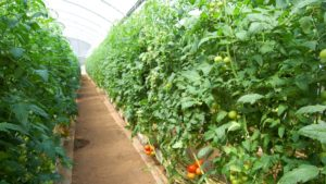 Registration Now Open for Greenhouse Crop Production Short Course