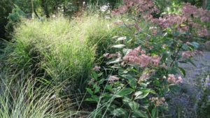 Perennial Plant Symposium Focuses on Green Infrastructure