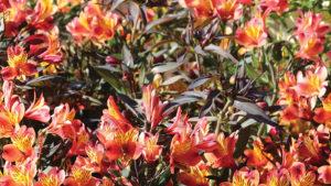 Spring Crops Recap 2018: Spring Season Redeemed After Rough Start