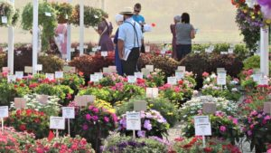 Plantpeddler Variety Day Features Stand-Out Begonias and More