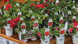 ScottsMiracle-Gro is Building on its Live Goods Momentum