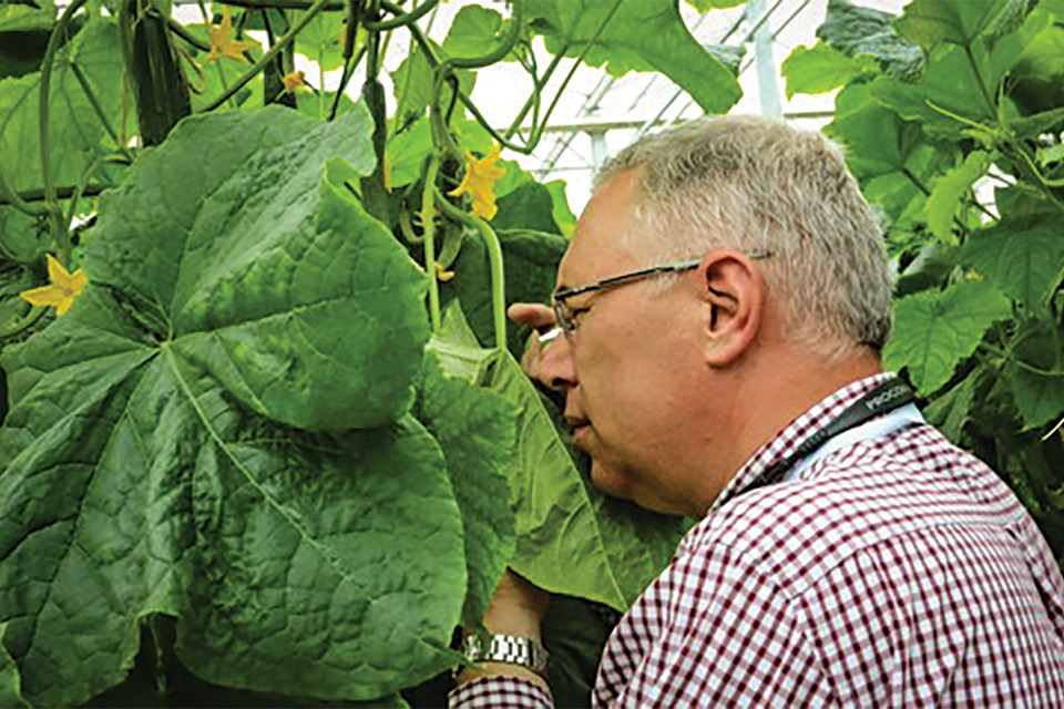 Scouting-and-Pest-ID-When-Using Greenhouse Biocontrol