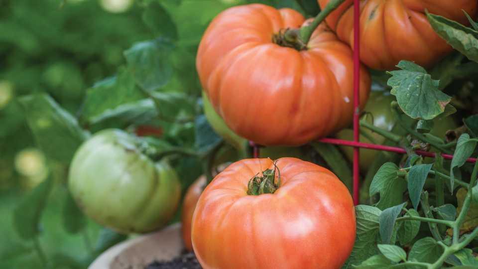 United Fresh Produce Training Checklist