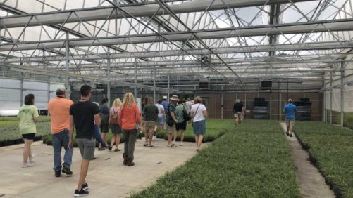 Hoffman Nursery Plays Tour Guide During Perennial Plant Symposium