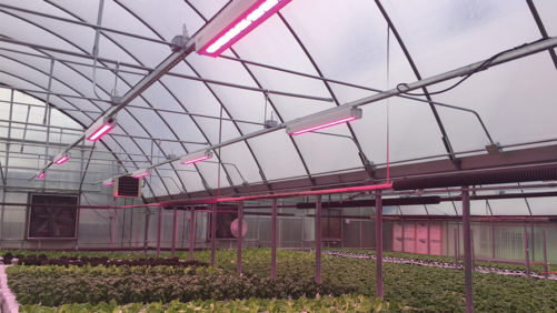 The Latest Innovations in Greenhouse Lighting