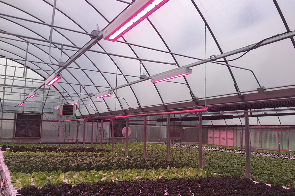 HortiLED-Top-PL-Light-Systems