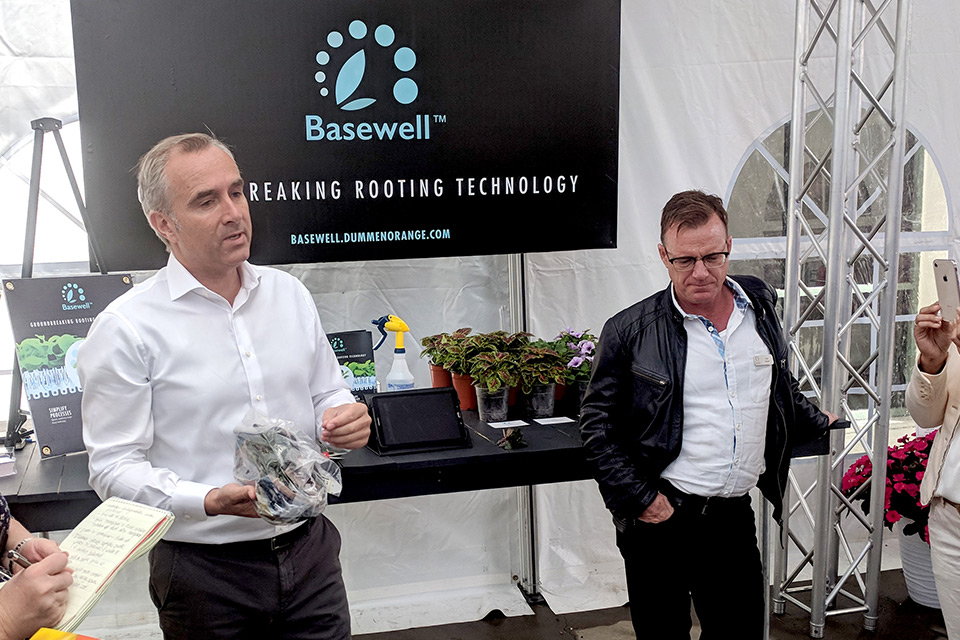 Dümmen Orange Created Basewell to Save Growers Time and Money