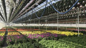 Pineae Greenhouses Earns Sustainability Certification