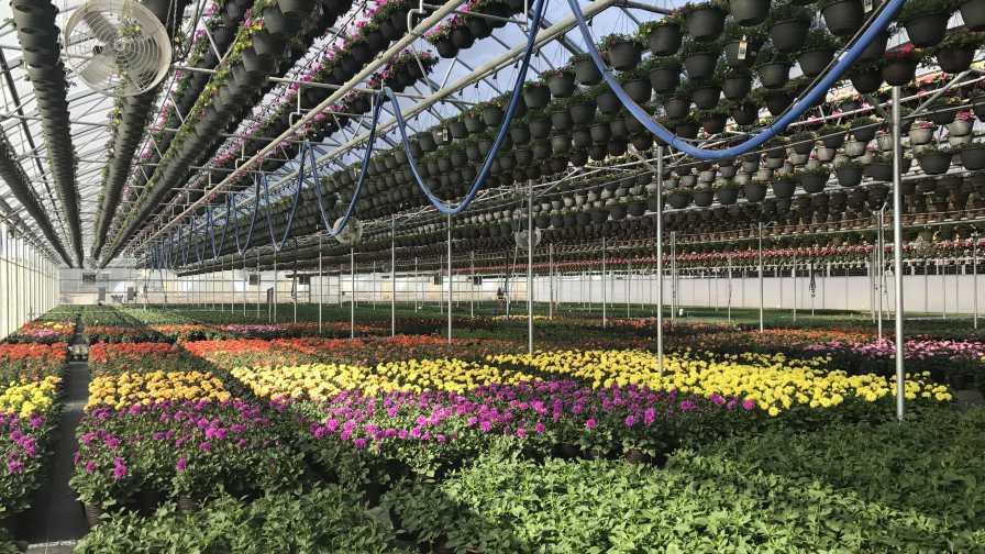 Pineae Greenhouses
