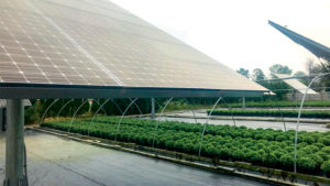 How Solar Panels Can Help Reduce Greenhouse Crop Production Costs