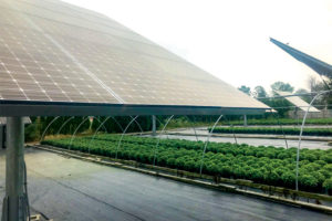 Solar-Panels-at-Claussens-Greenhouse