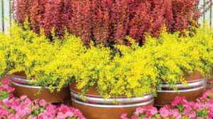 Three Perennials That Can Withstand Intense Heat