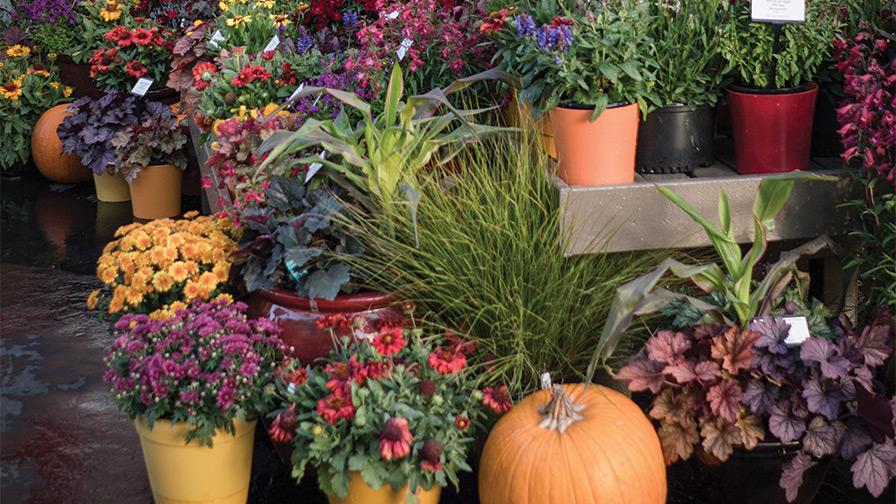 Fall-Perennials-in-Decorator-Pots perennials programming