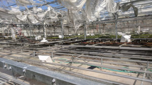 Oglesby Plants Resumes Shipping After Hurricane Michael