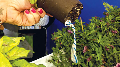 WaterWick Aims to Make Plant Chores Painless