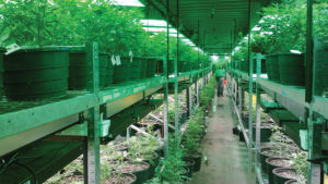 What You Need to Know Before Leasing to a Cannabis Grower