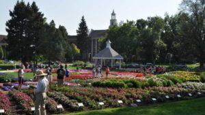 2018 Southwest/West Floriculture Field Trials: Colorado State University
