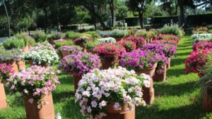 2018 Southwest/West Floriculture Field Trials: Dallas Arboretum and Botanical Garden
